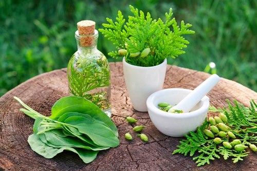 طب سنتی ایران گیاه درمانی