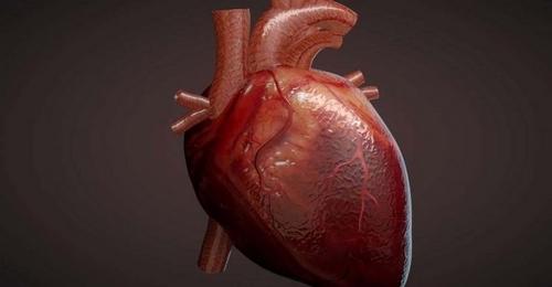 فلوشیپ های جراحی قلب و عروق